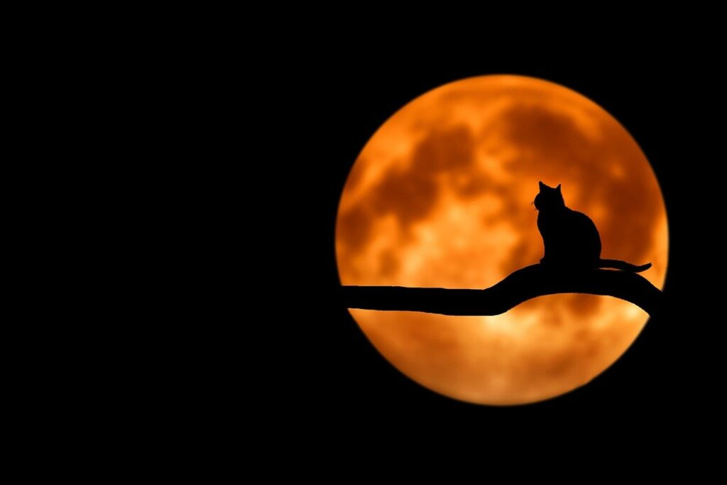 夜に浮かぶ満月と木の上に座る猫の影