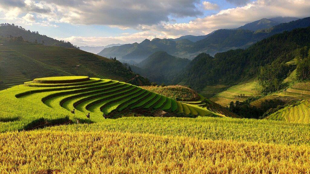 一面に広がる景色と段々畑