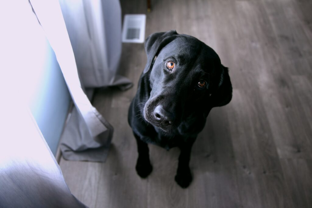 首をかしげる黒い犬