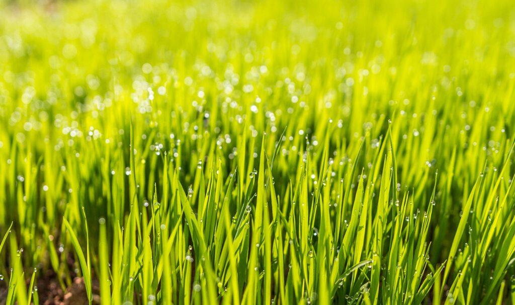水滴と芝生