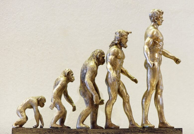 人類の進化過程